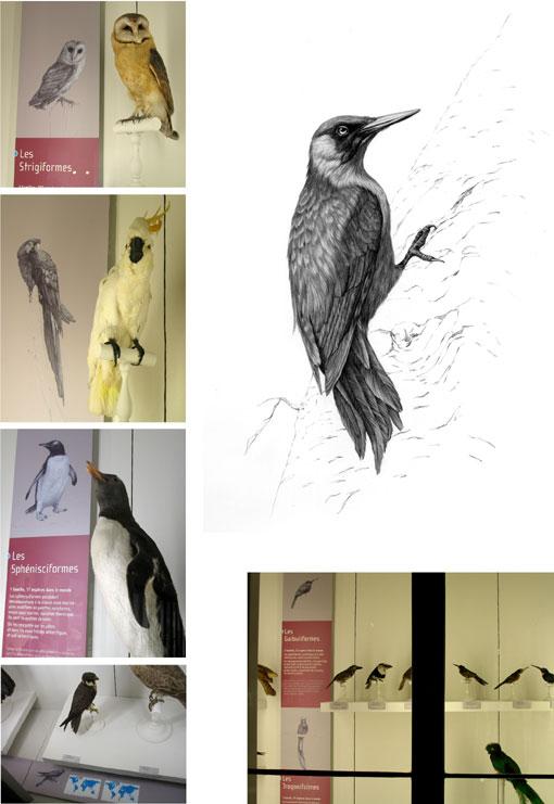 panneau-oiseaux